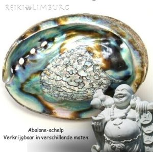 Abalone-schelp